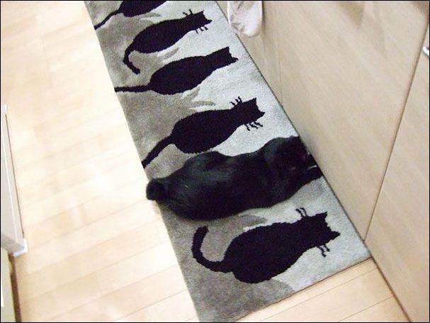 عکس های گربه ,عکس های گربه با حال,عکس های گربه جالب,عکس های گربه خنده,]عکس های گربه پیدا,پیدا عکس های گربه ,عکس های گربه عکس,عکس های گربه ناب ,عکس جالب عکس های گربه