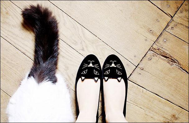 گربه,گربه با حال,ایده گربه,گربه جالب,گربه عاشقانه,گربه شیک,گربه بامزه,گربه لاکچری,عکس گربه ایدهکار بارمزه با گربه,کار گربه گربه