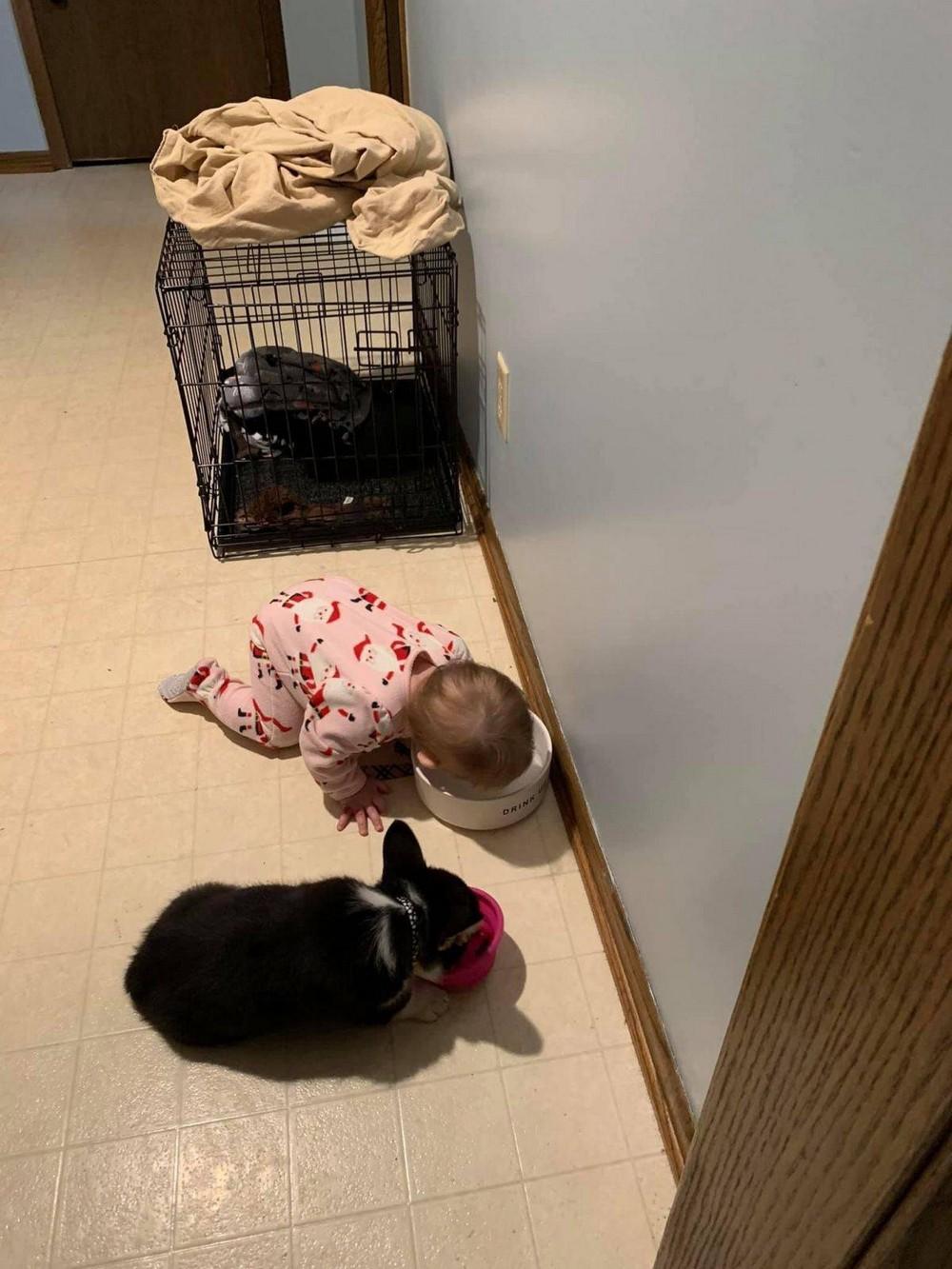 بچهعکس های خنده دار وقتی بچه رو تنها میزاری، وقتی بچه رو به حال، وقتی بچه رو به حال خودش ول میکنی بامزه، وقتی بچه رو به حال خودش ول میکنی شیک، وقتی بچه رو به حال خودش ول میکنیبچه، وقتی بچه رو تنها میزاری، وقتی بچه رو تنها میزاری باحال، وقتی بچه رو تنها میزاری خنده دار، وقتی بچه رو تنها میزاری عکس، وقتی بچه ها تنها باش، وقتی بچه ها تنها باش باحال